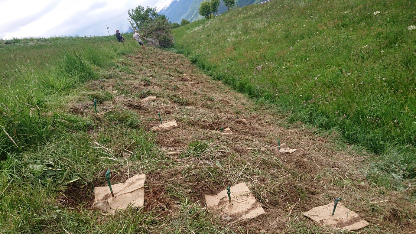 PIWI su 1.450 m nelle Alpi Venoste